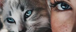 cat-human-relationship